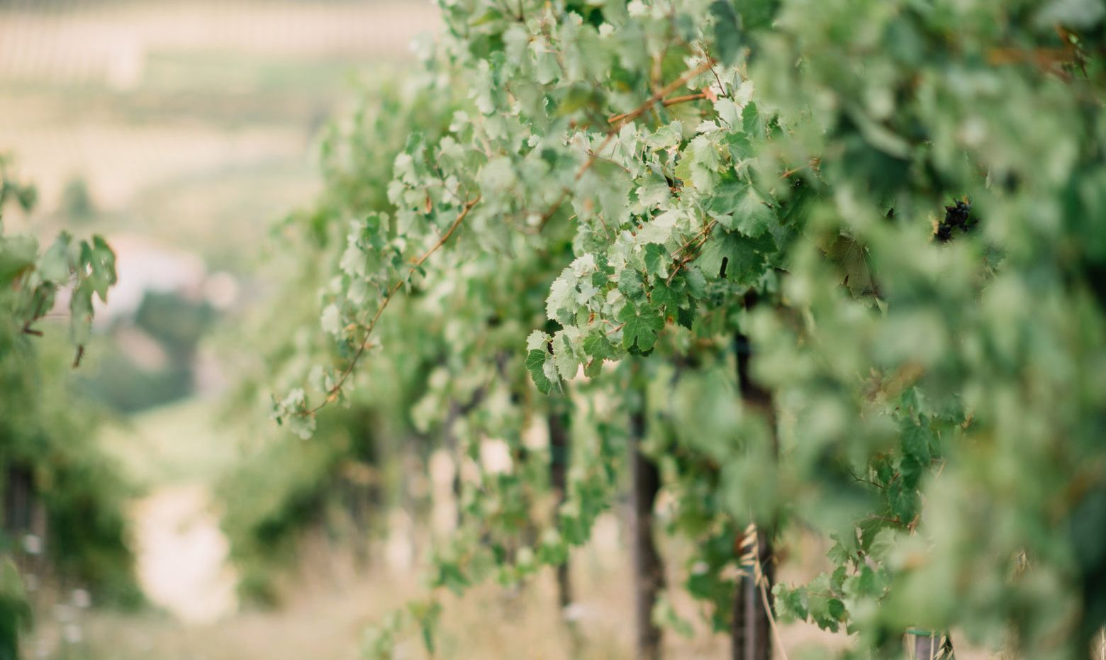 Vineyard blogpost